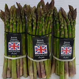 English Asparagus Season