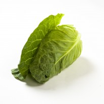 Cabbage Pointed Green